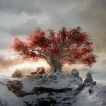 heart tree game of thrones